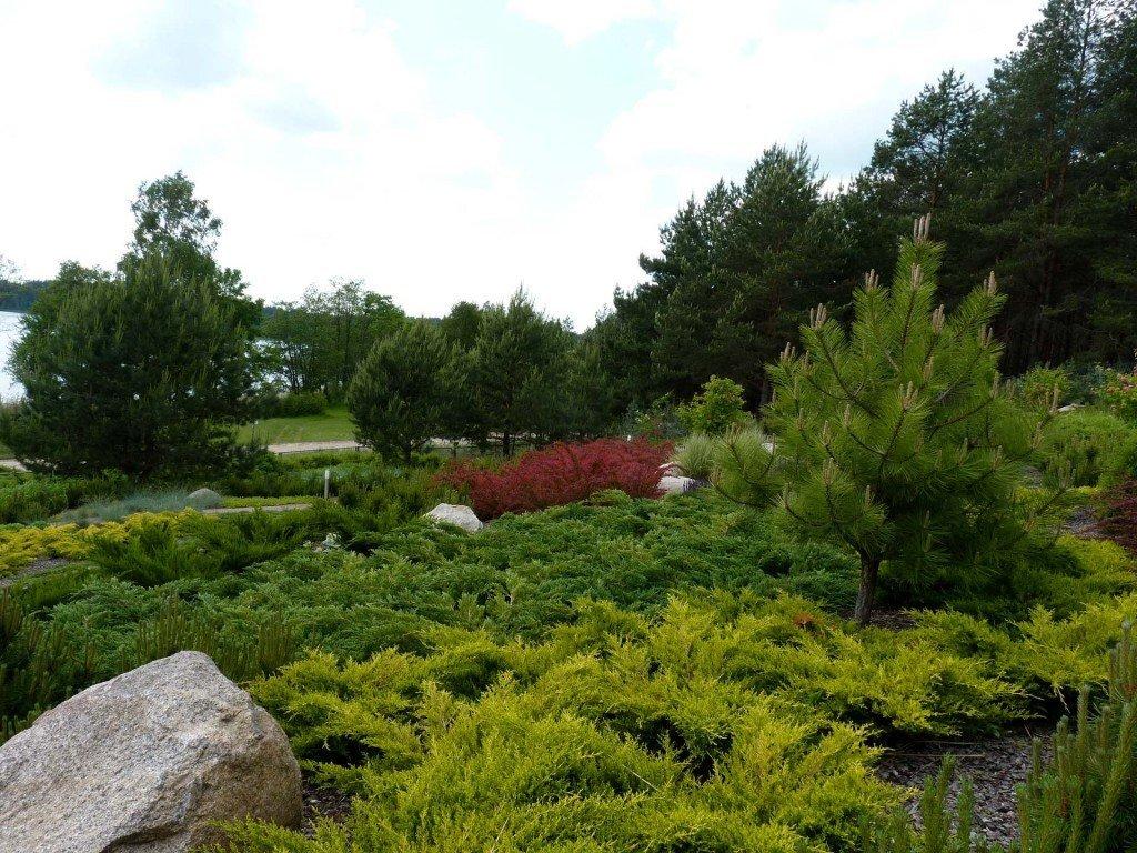 Suwalska wydma (Ogród będzie prezentowany w 2020 roku w programie Nowa Maja w Ogrodzie)